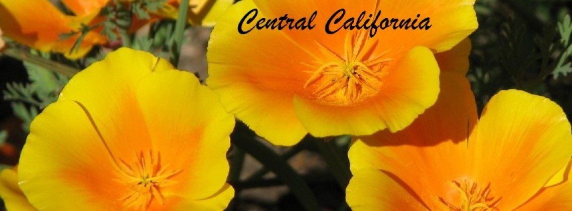 California Central
